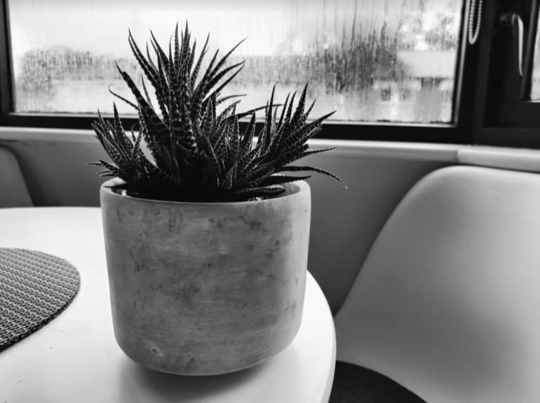 OnePlus 8T camera sample plant black and white