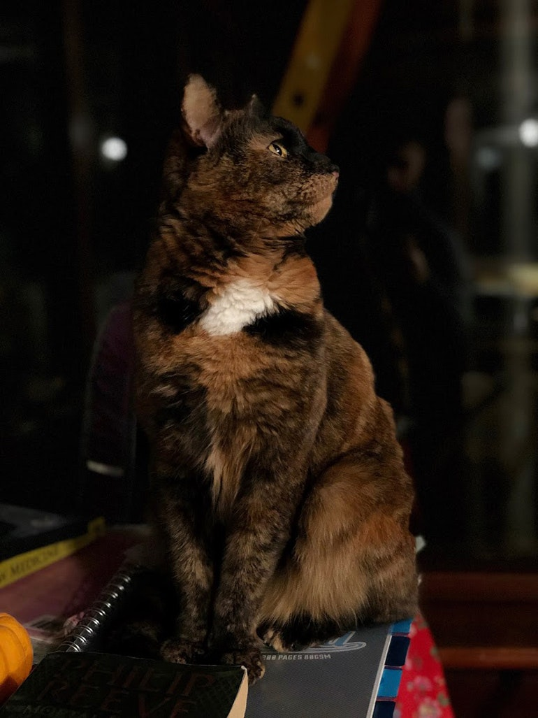 iPhone-X-camera-sample-tortoiseshell-cat-in-low-light