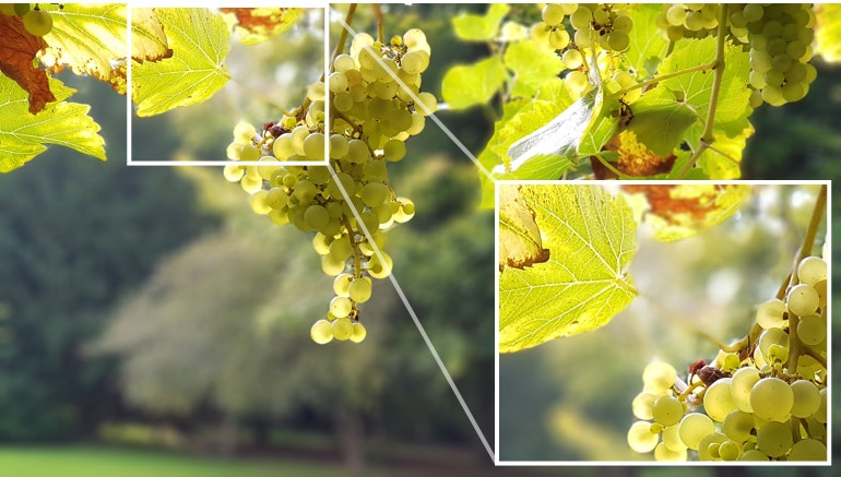 Samsung-Galaxy-Note-8-camera-sample-grapes-closeup
