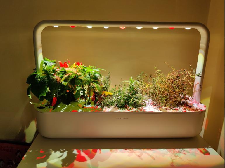 OnePlus 8T camera sample plants