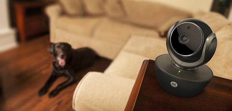 Motorola petcam