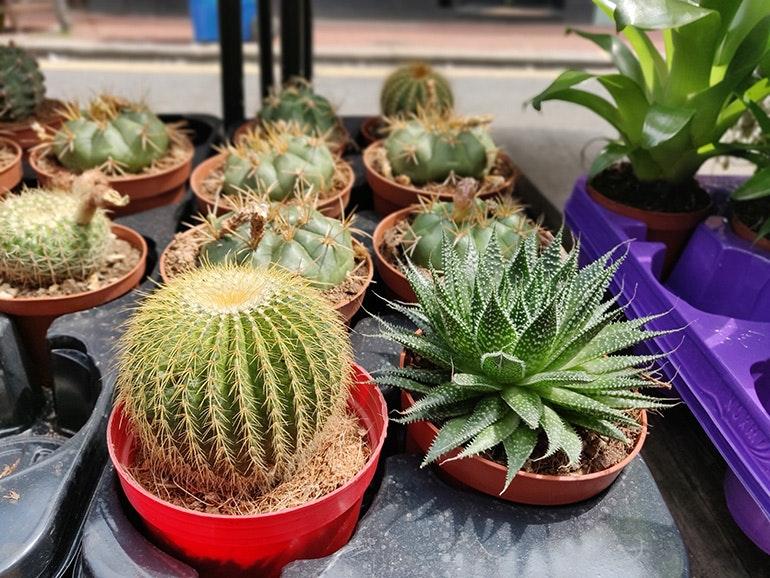 OnePlus 6 cactus