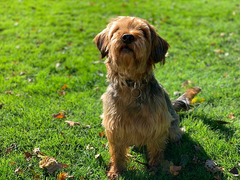 iPhone XS camera sample dog