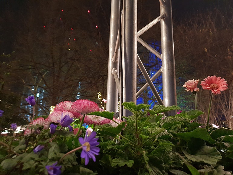 Samsung-Galaxy-S9-Plus-camera-sample-flowers-in-lowlight