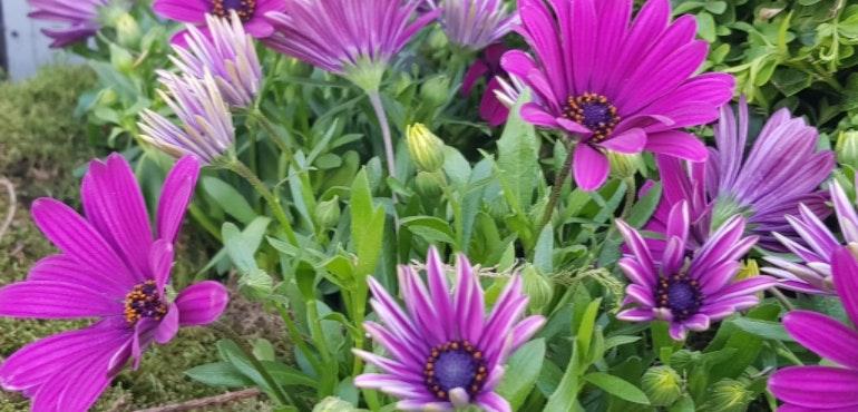 Samsung Galaxy S8 camera sample flowers